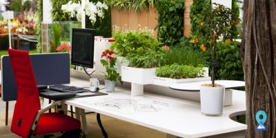 5 Reasons You Should Have Plants in Office